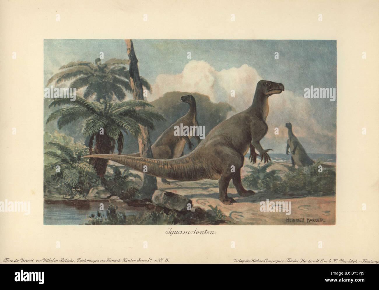 Iguanodontes eran dinosaurios herbívoros que vivieron desde mediados del Jurásico al Cretácico tardío Imagen De Stock