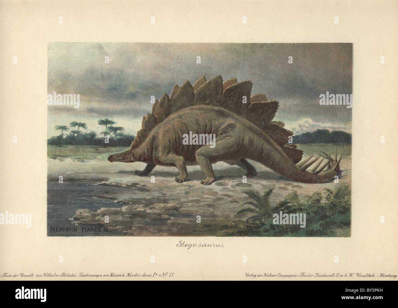 Stegosaurus armatus es un tipo de dinosaurios blindados desde finales del periodo jurásico Imagen De Stock