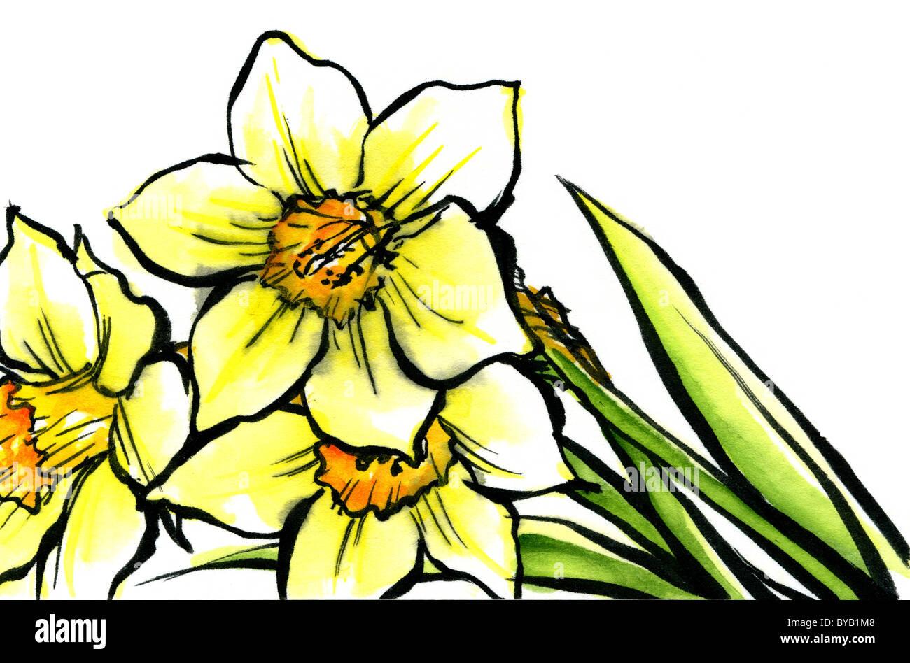 Narcisos Imagen De Stock