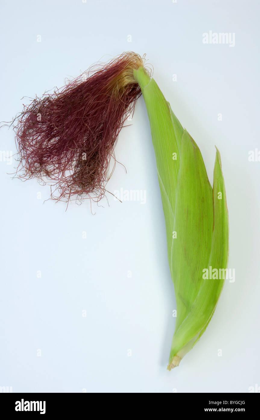 El maíz, el maíz (Zea mays). Inflorescencia femenina. Studio picture contra un fondo blanco. Imagen De Stock