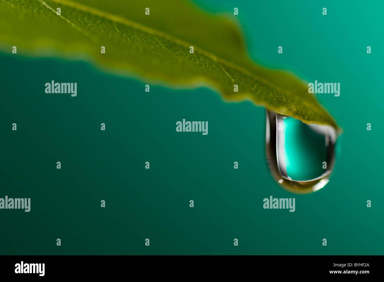 Gota de agua en la hoja Imagen De Stock