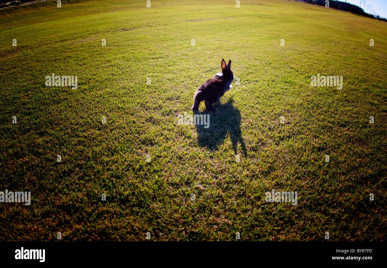 Conejito saltando a través de la hierba en día soleado Imagen De Stock
