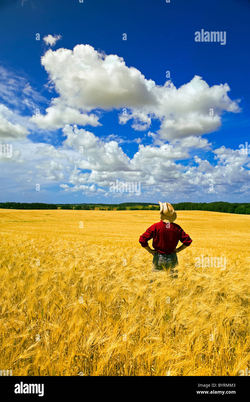 Agricultura - Un agricultor inspecciona su cosecha de cebada madura con cúmulos sobrecarga / Tigre Hills, Manitoba, Imagen De Stock