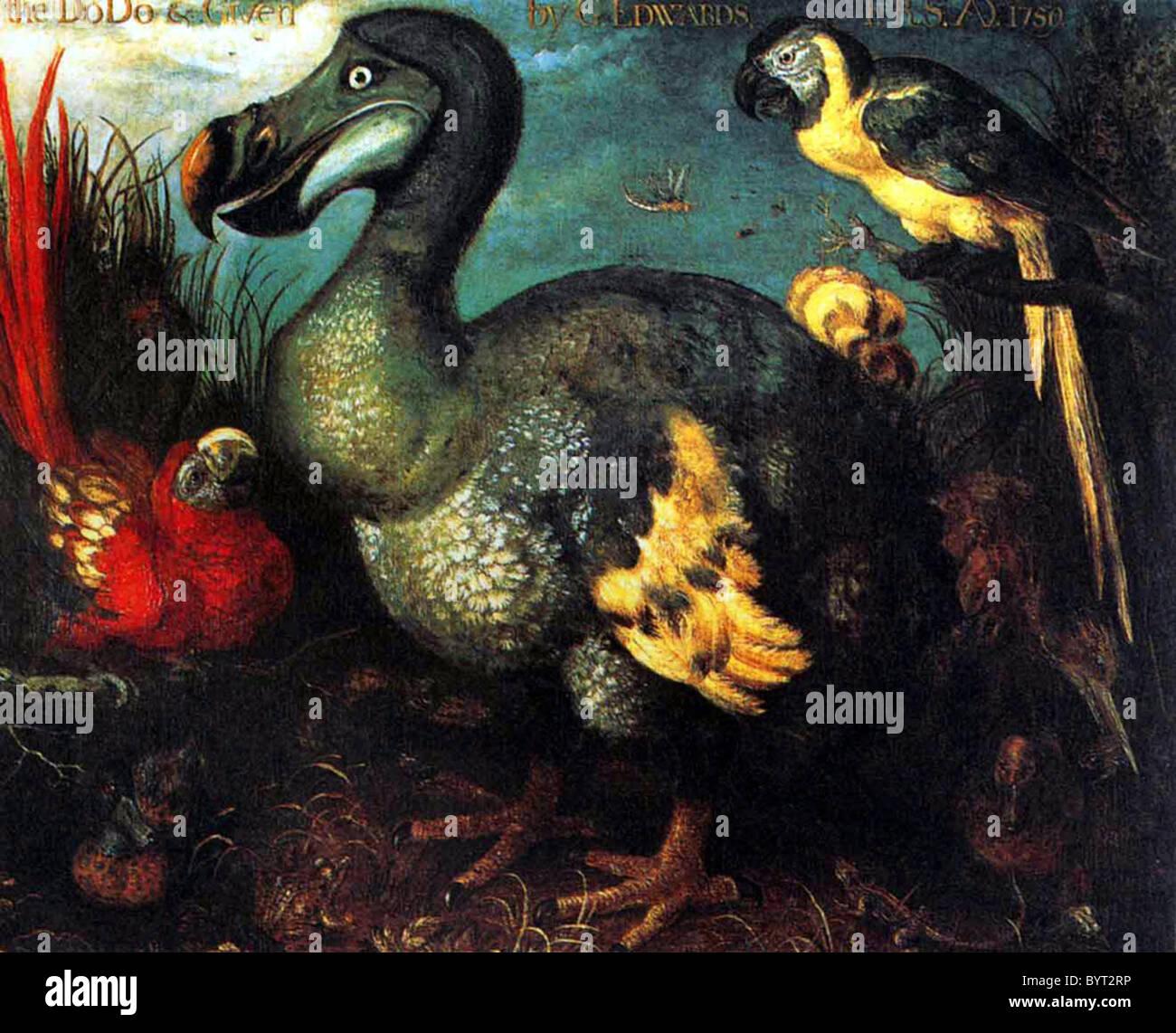 Dodo Imagen De Stock