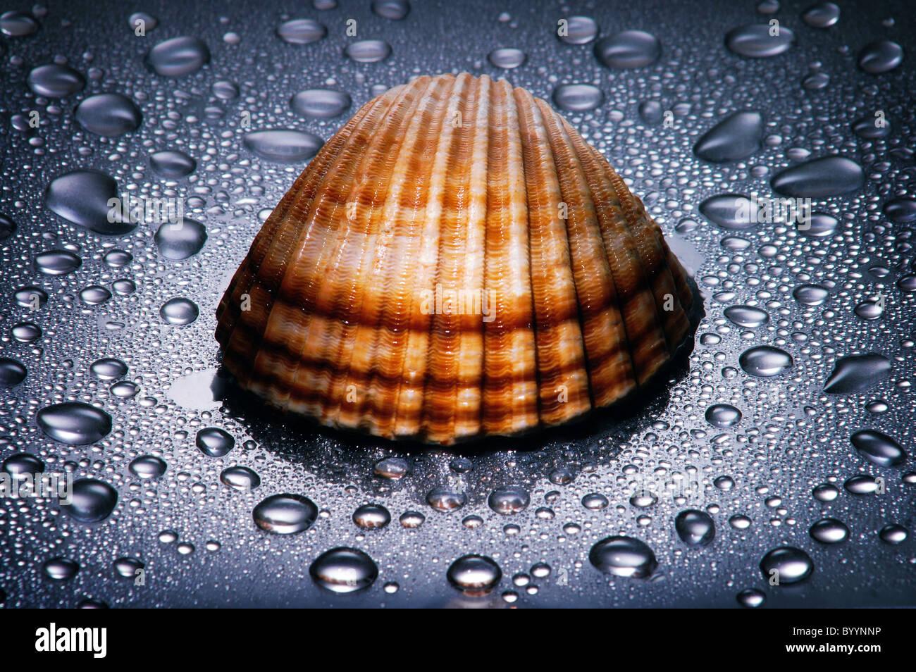El Seashell, gotas de agua , iluminación dramática , cerrar Imagen De Stock