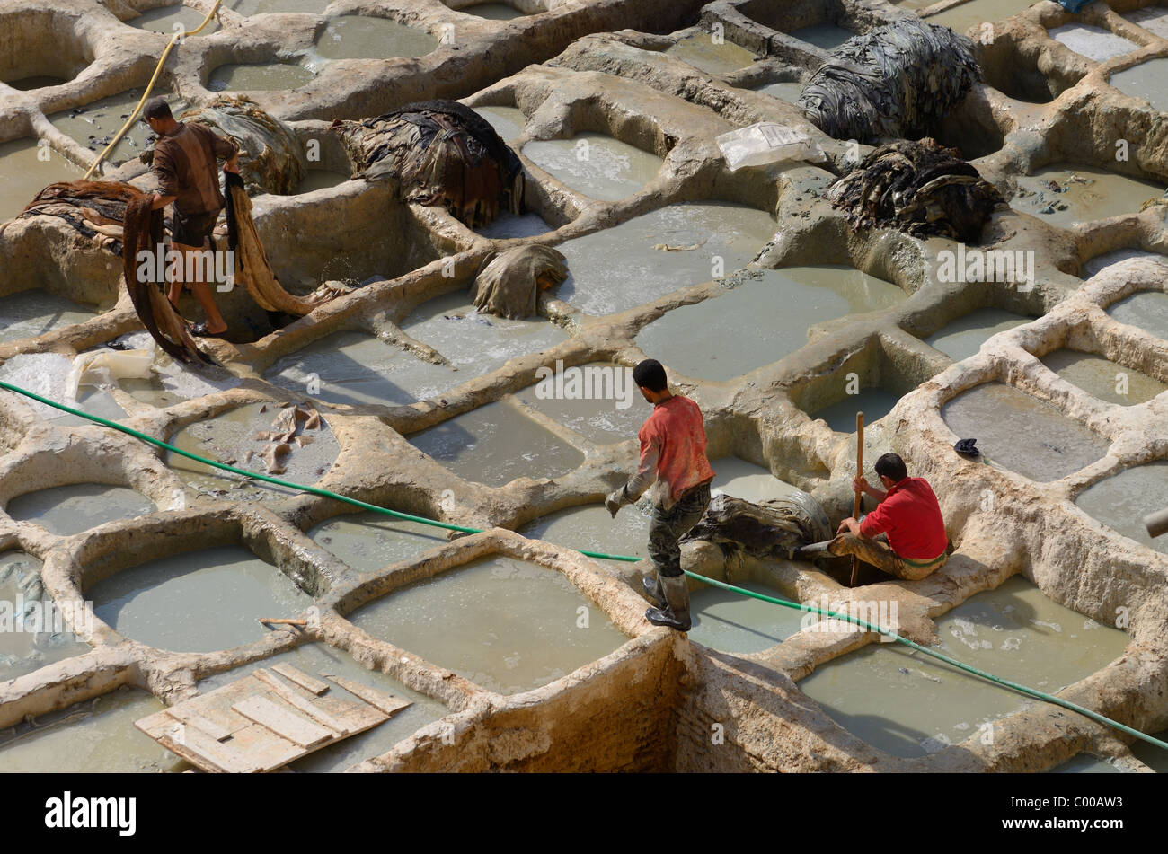 Los trabajadores en wet blue bronceado cromo empapando el hoyo cubas en fes chouara tenería Marruecos Imagen De Stock