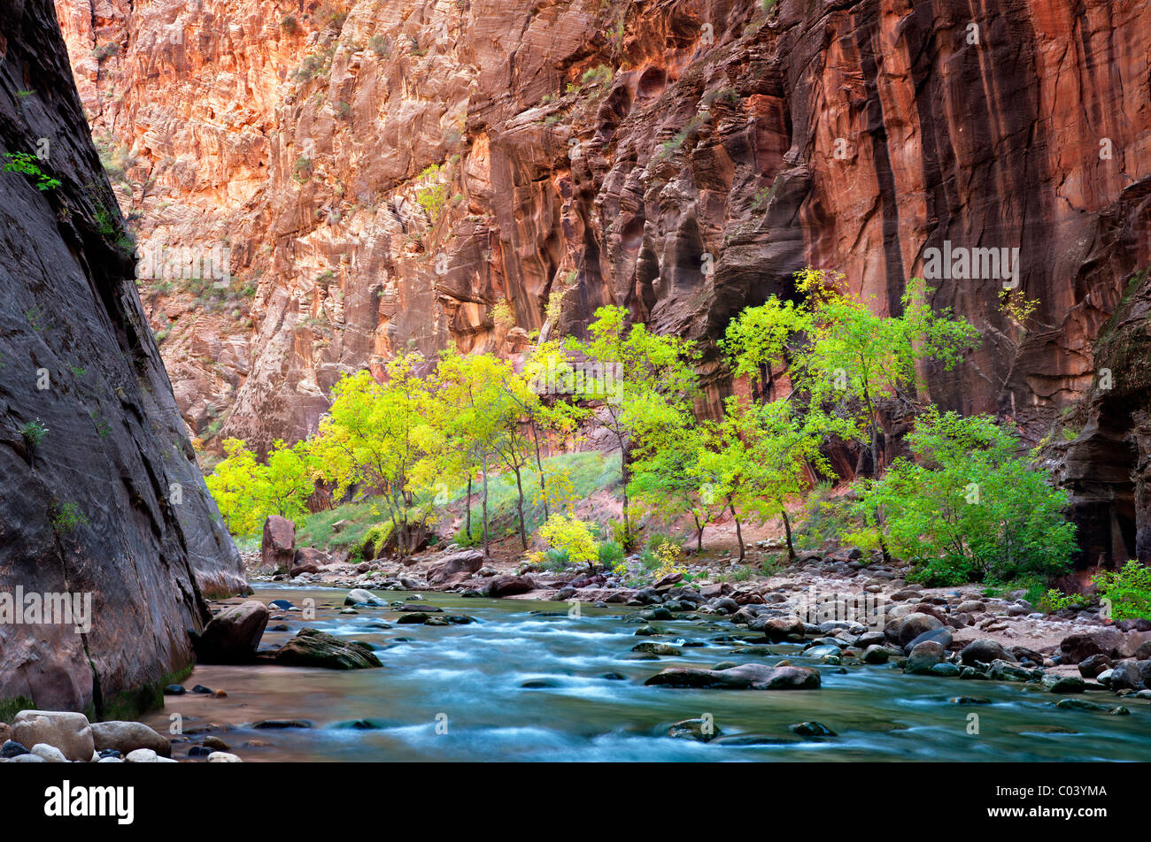 Caída de árboles coloreados en Virgin River Canyon. Parque Nacional de Zion, Utah. Foto de stock