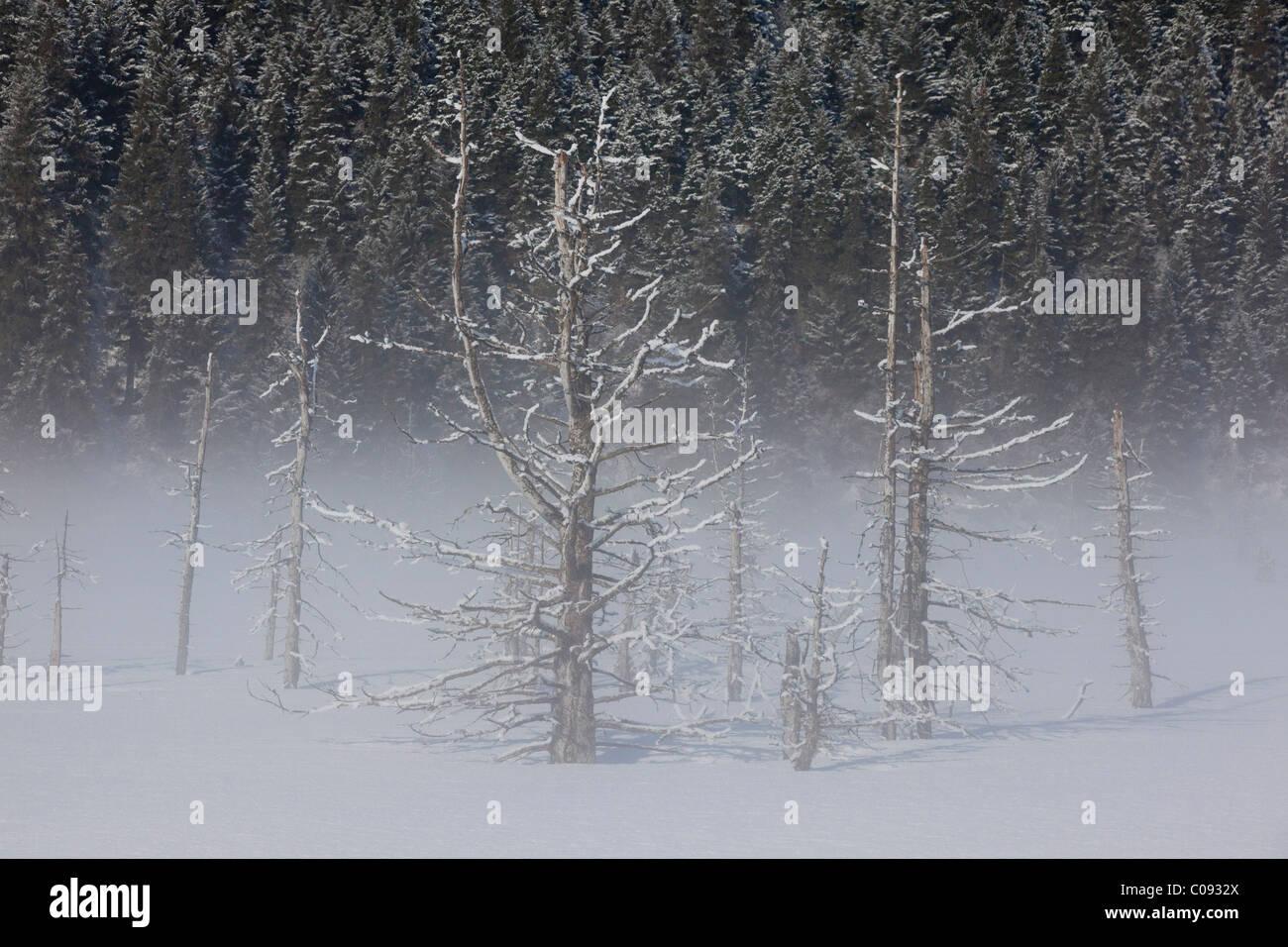 Vista de agua salada hoarfrosted mató árboles en una mañana de niebla a lo largo de la carretera de Seward cerca de Portage, Southcentral Alaska, Invierno Foto de stock