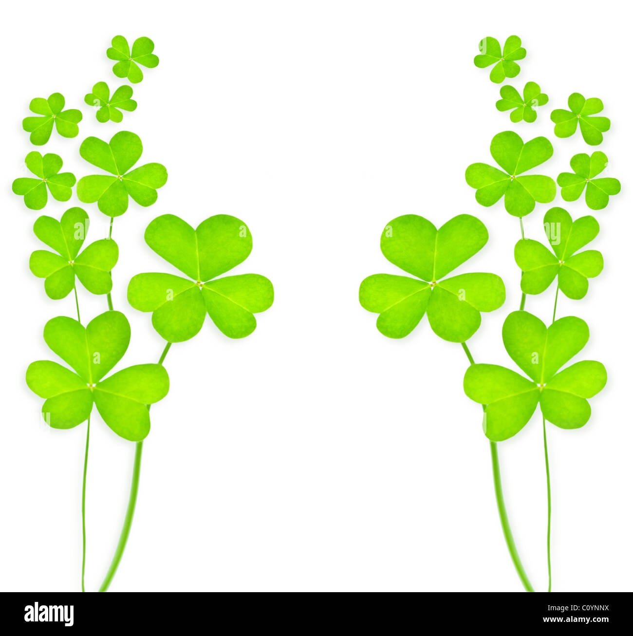 Green Clover Holiday Background Collage Imágenes De Stock & Green ...