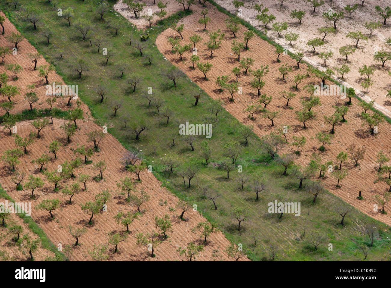 España agricultura orchard patrones fruta naranjas aceitunas almendras huerto Imagen De Stock