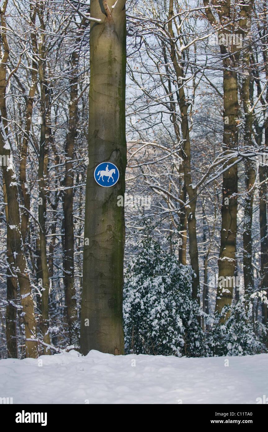 Cartel en una pista de equitación beech troncal en un bosque de hayas nevadas Imagen De Stock