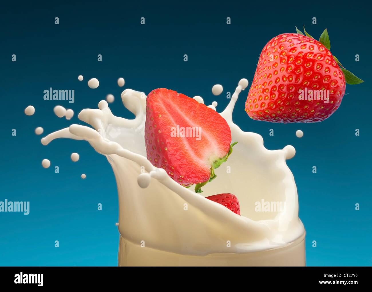 Salpicadura de leche, causadas por la caída en una fresa madura. Aislado sobre un fondo azul. Imagen De Stock