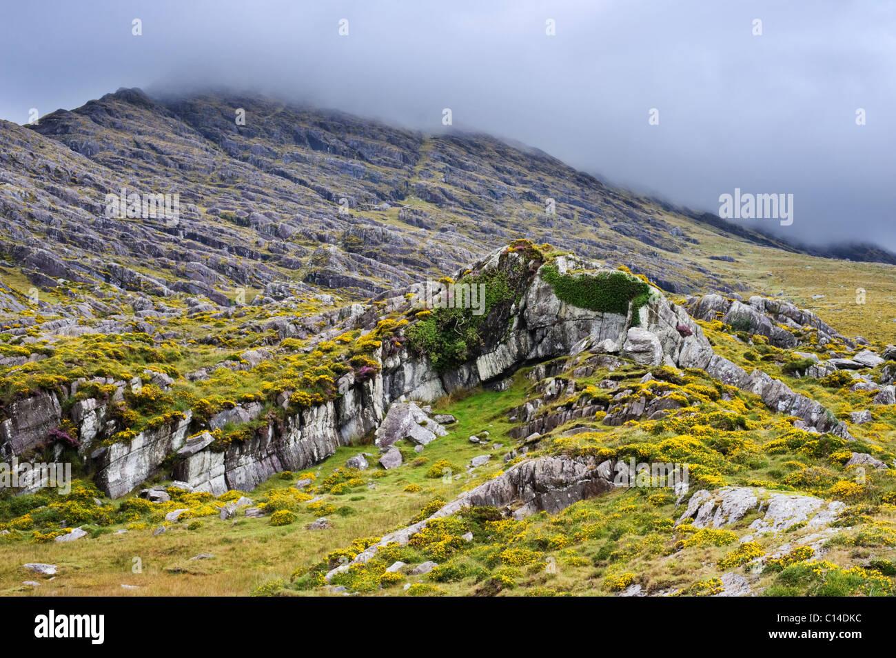 Las rocas de piedra arenisca Devoniano plegada sobre la colina hambrientos cubiertos de niebla, la península de Foto de stock