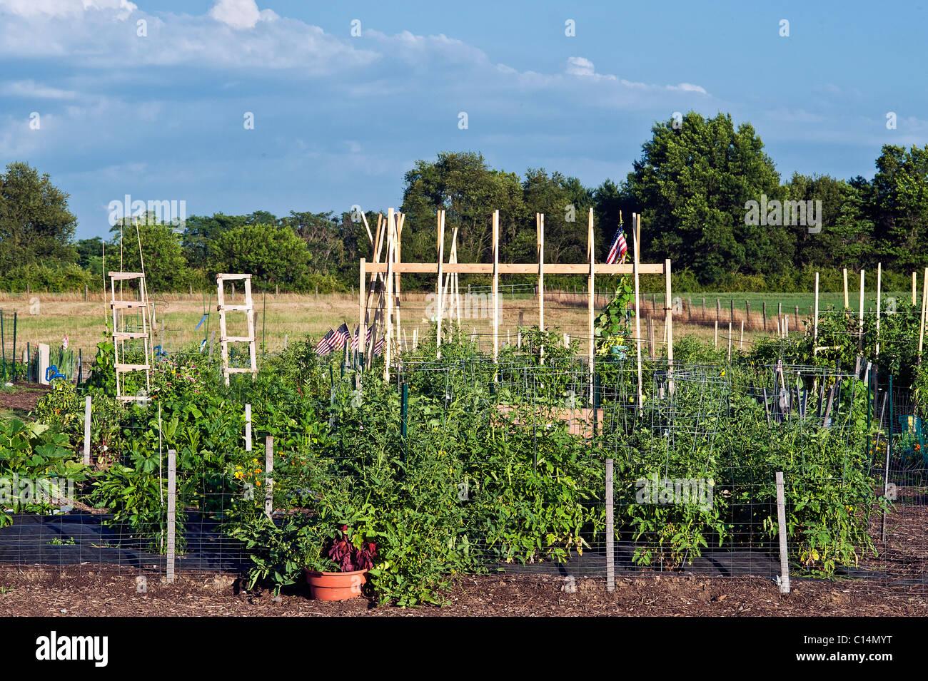 Jardín comunitario Imagen De Stock