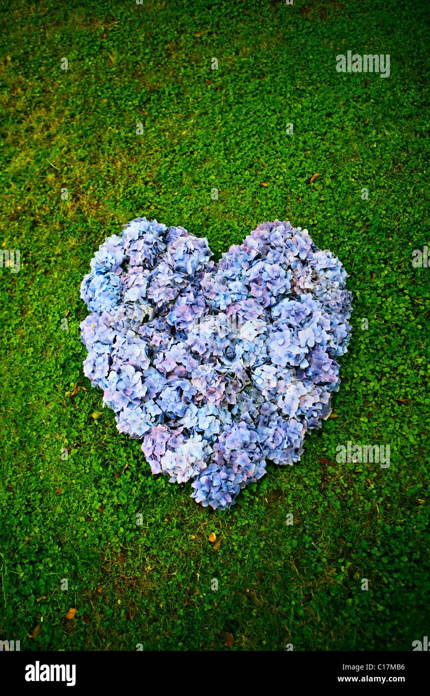 Corazón púrpura Foto de stock