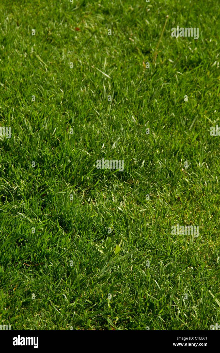 Como plantar cesped en el jardin simple juego de la rayuela para el jardn with como plantar - Plantar cesped natural ...
