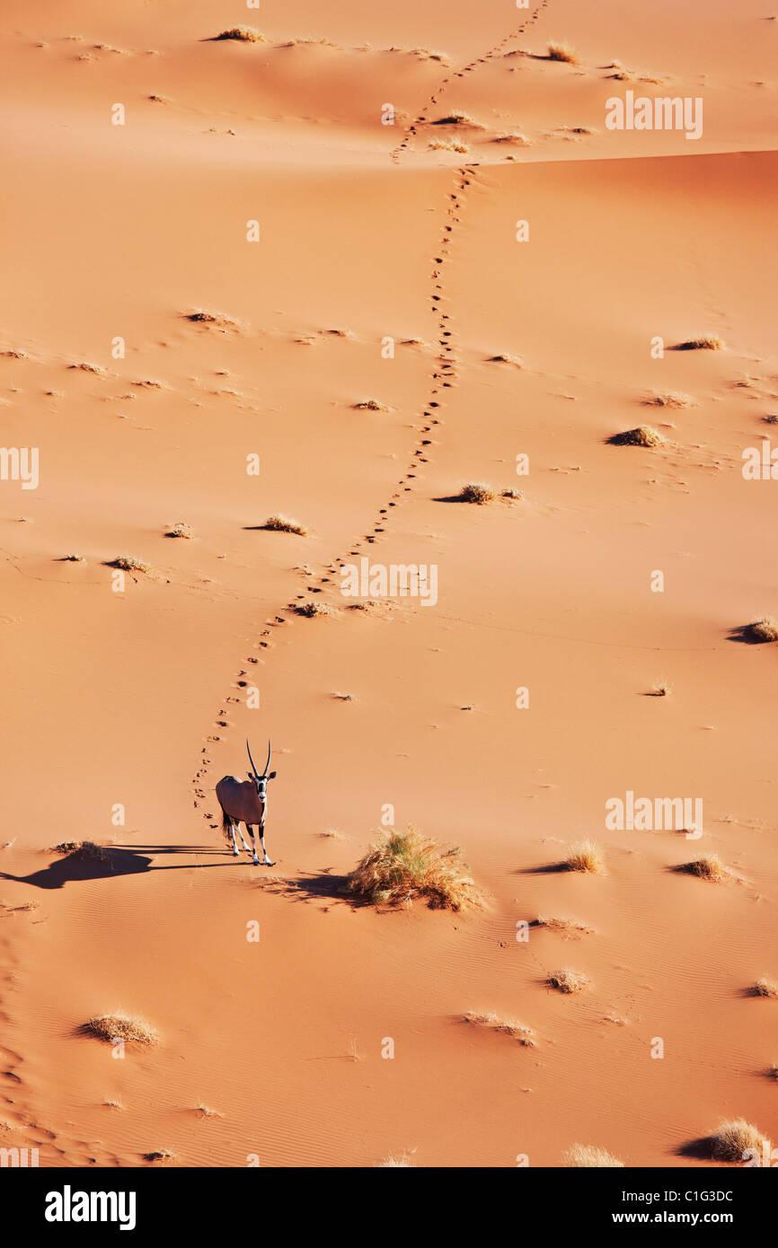 Gemsbok (Oryx gazella) en el típico hábitat del desierto desierto de Namibia Imagen De Stock
