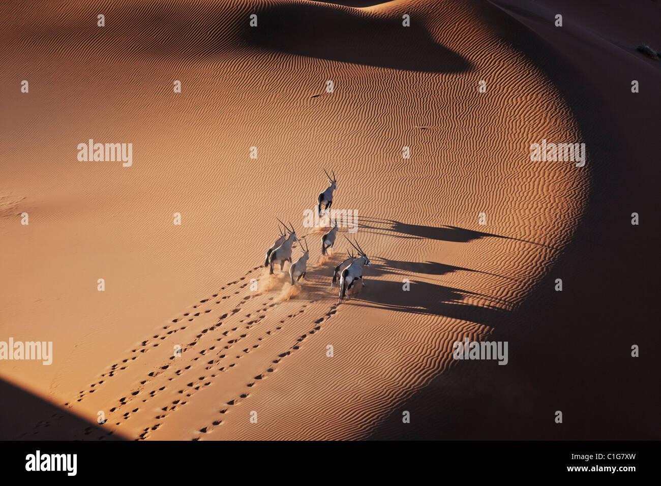 Gemsbok (Oryx gazella) en el típico hábitat del desierto de dunas de arena del desierto de Namibia Imagen De Stock