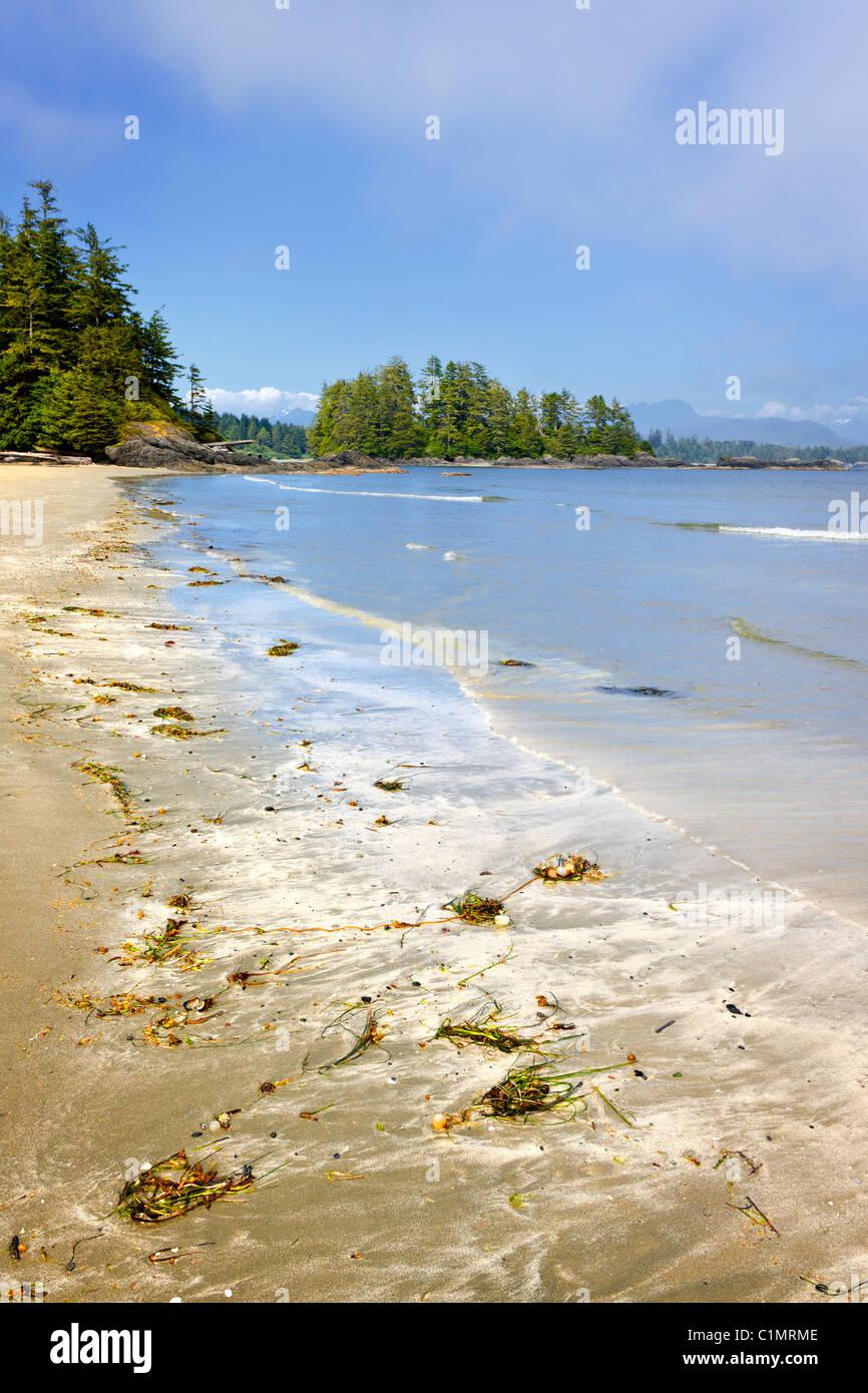 Long Beach en Pacific Rim National Park, la isla de Vancouver, Canadá Foto de stock