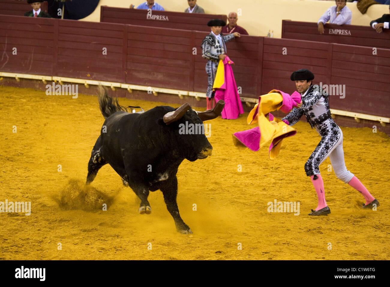 Bandarilheiros estilo portugués en acción durante las corridas de toros de  Campo Pequeno 6855b020405