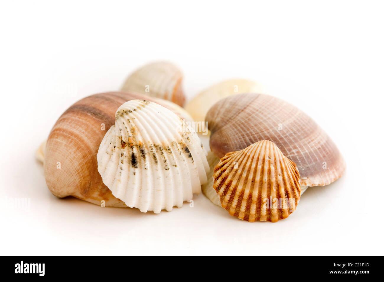 Conjunto de diferentes conchas de mar Imagen De Stock