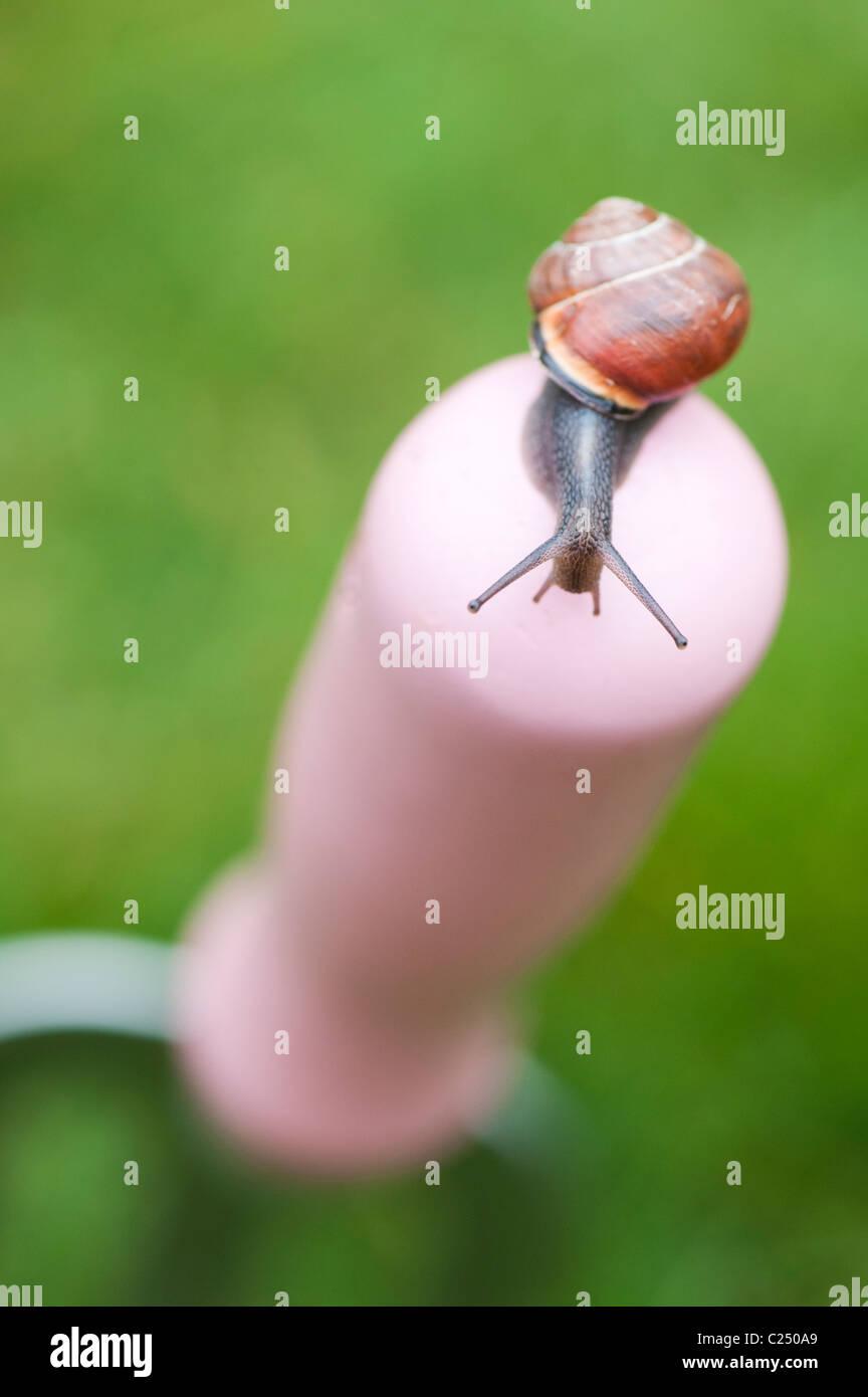 Pequeño jardín caracol en una horquilla de jardín rosa mango. UK Imagen De Stock