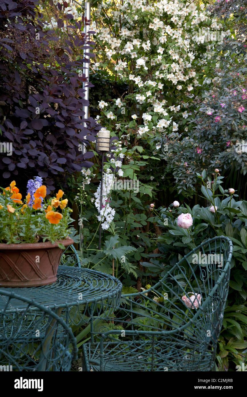 Jardín suburbano con verde verdigris cable mesa y sillas contra cotinus, Filadelfo, clemátide y peonía Imagen De Stock