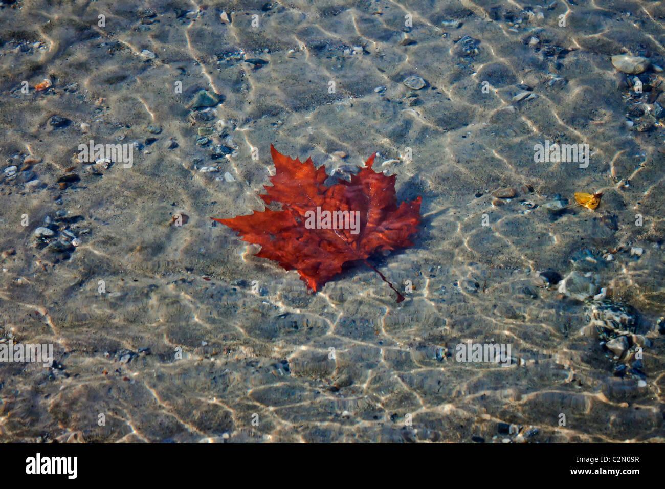 Hoja bajo el agua. Imagen De Stock