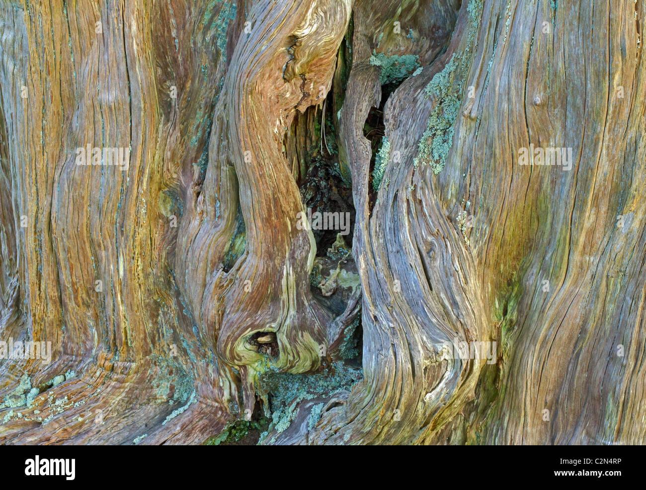 Texturas en árbol Bardsea Imagen De Stock