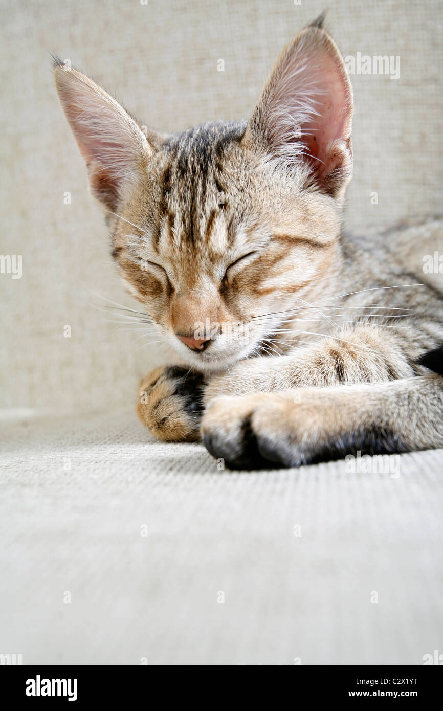 Cat. Foto de stock