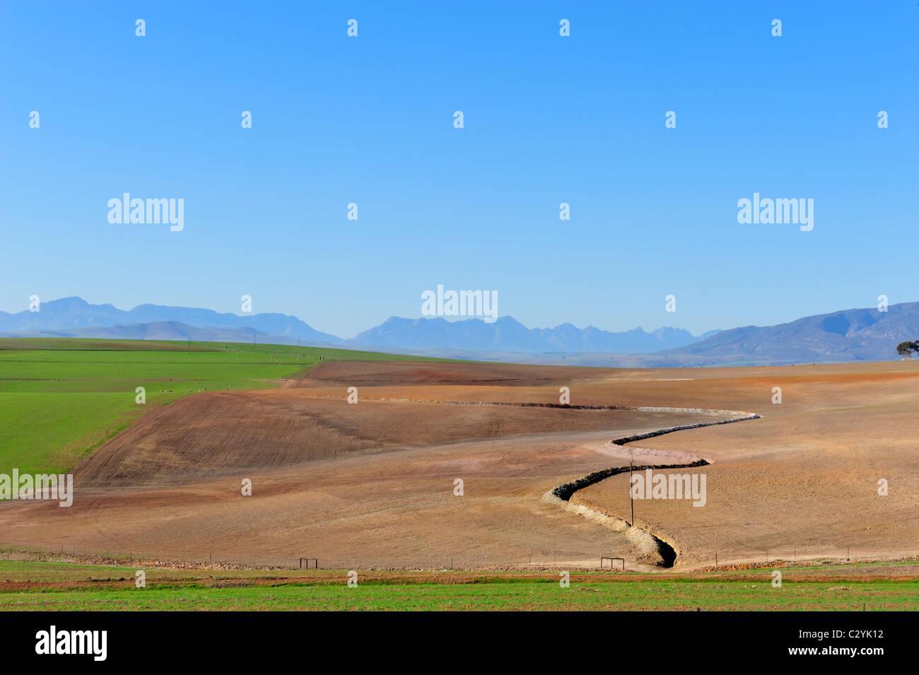 Preparado campo de Overberg con contorno, Western Cape, Sudáfrica Imagen De Stock