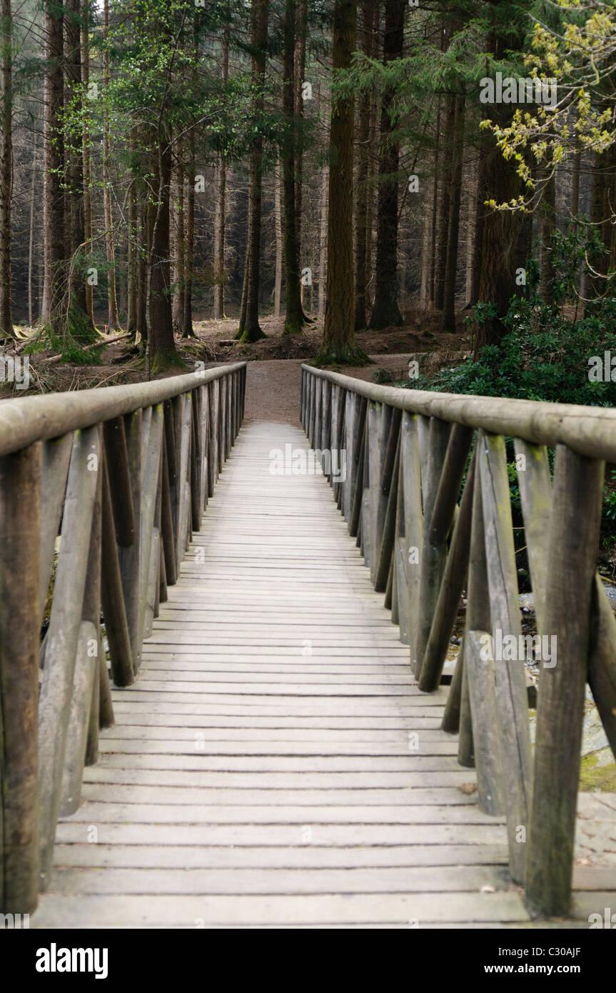 Puente de madera sobre el río Shimna, Irlanda del Norte, que se presenta en una escena de Juego de Tronos Foto de stock