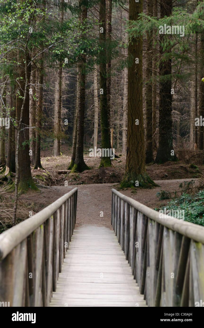 Puente de madera que conduce a un oscuro bosque de alerces, como aparece en una escena en el Juego de Tronos Foto de stock