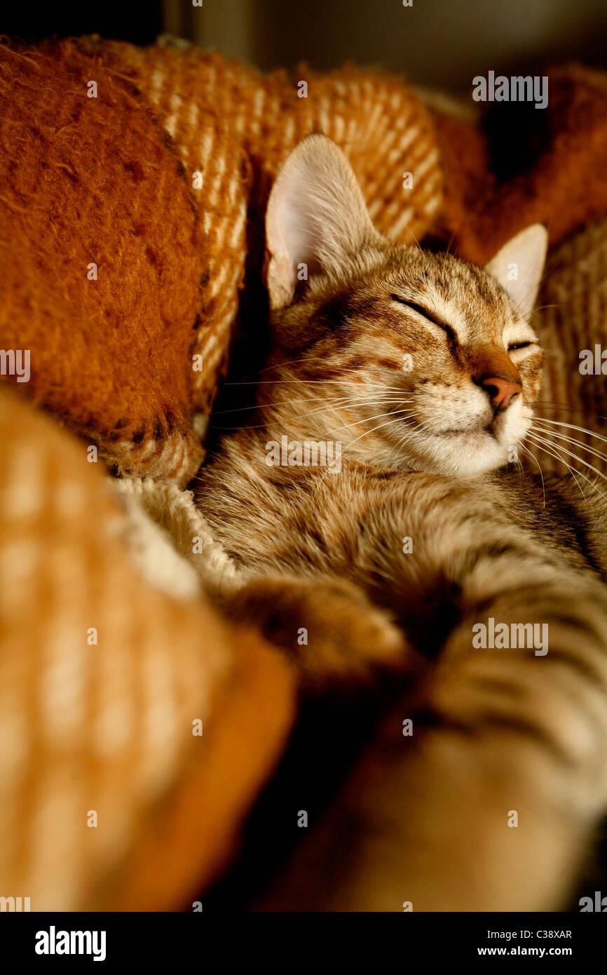 Gato durmiendo Foto de stock