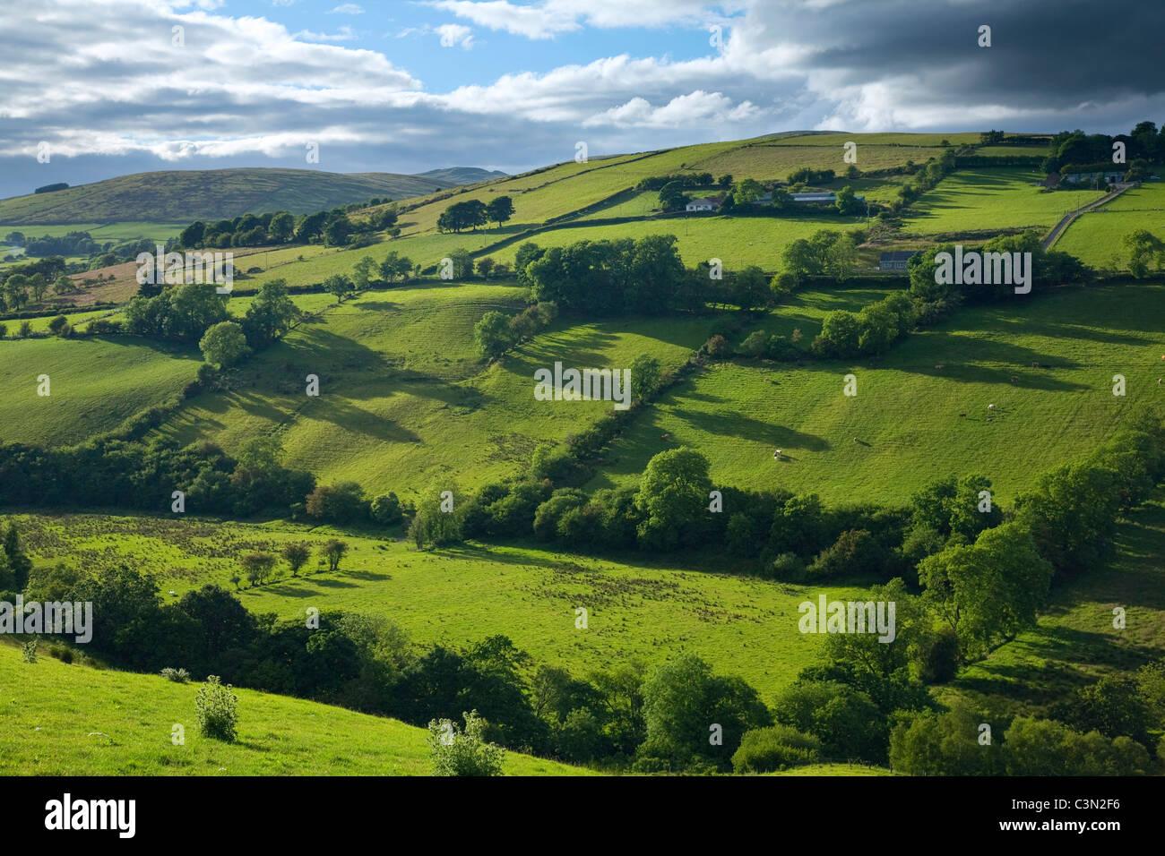 Campos de verano en el valle, las Montañas Sperrin Glenelly, Condado de Tyrone, Irlanda del Norte. Imagen De Stock