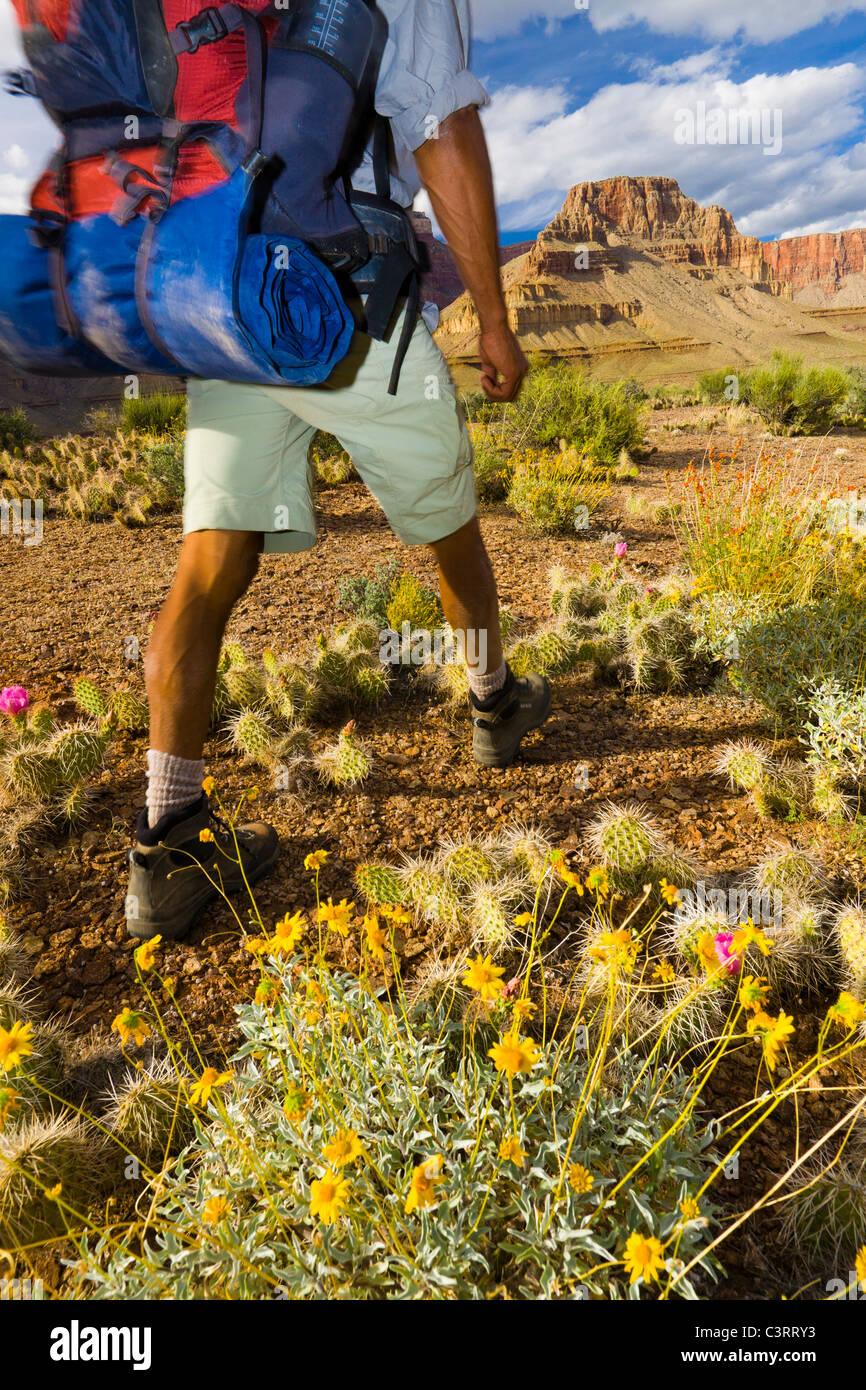 Hombre Negro senderismo en cañadón Foto de stock