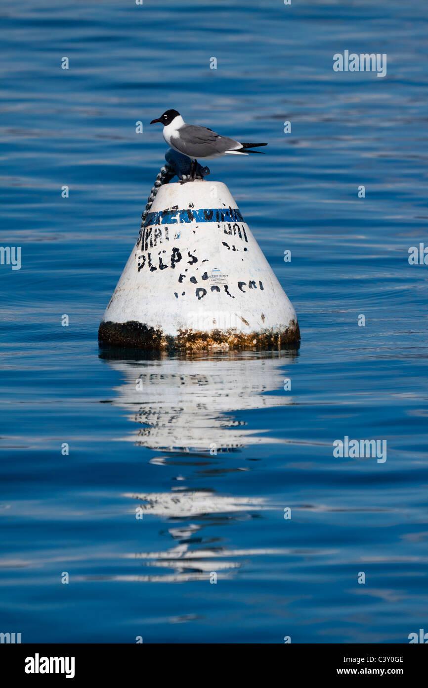 Perfil de gaviota encaramado sobre una boya flotante con una reflexión sobre el agua azul oscuro Imagen De Stock