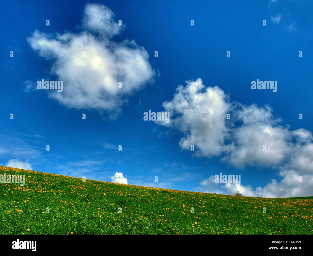 Escenografía, diente de león, la naturaleza, el formato horizontal, el día, la pradera, las nubes, Imagen De Stock