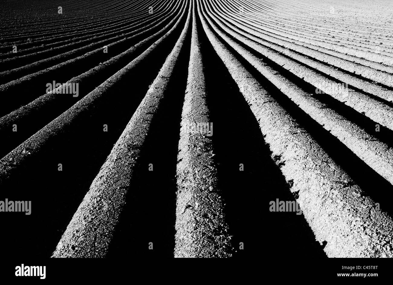 Crestas y surcos de patrón del campo arado. Monocromo Imagen De Stock