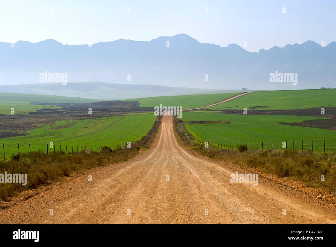 Camino de tierra que conduce a Nethercourt desde la autopista N2, cerca de Caledon en la provincia del Cabo Occidental Imagen De Stock