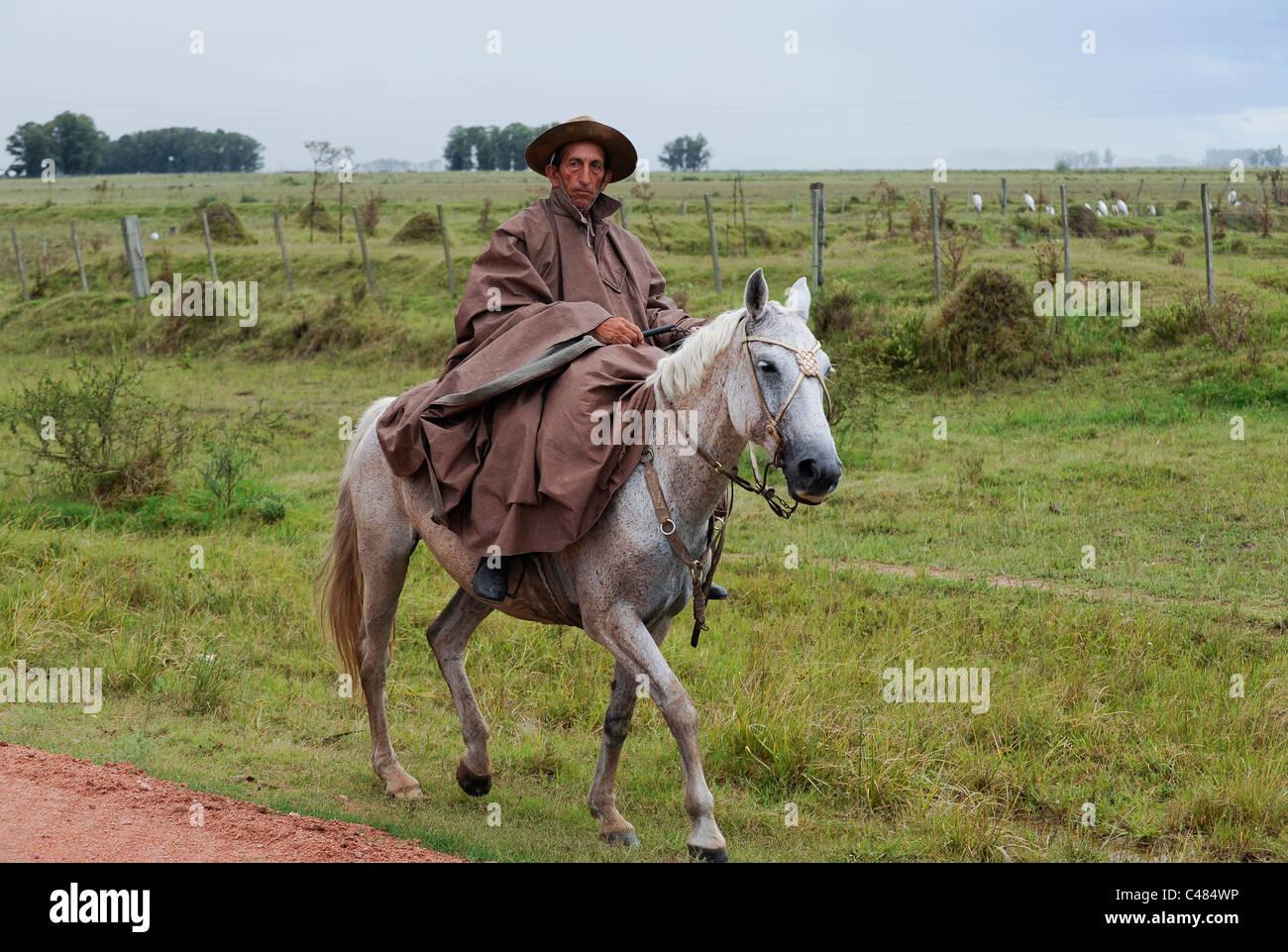 URUGUAY agricultura y ganadería , Gauchos con caballos y vacas en los pastizales de ganado Imagen De Stock