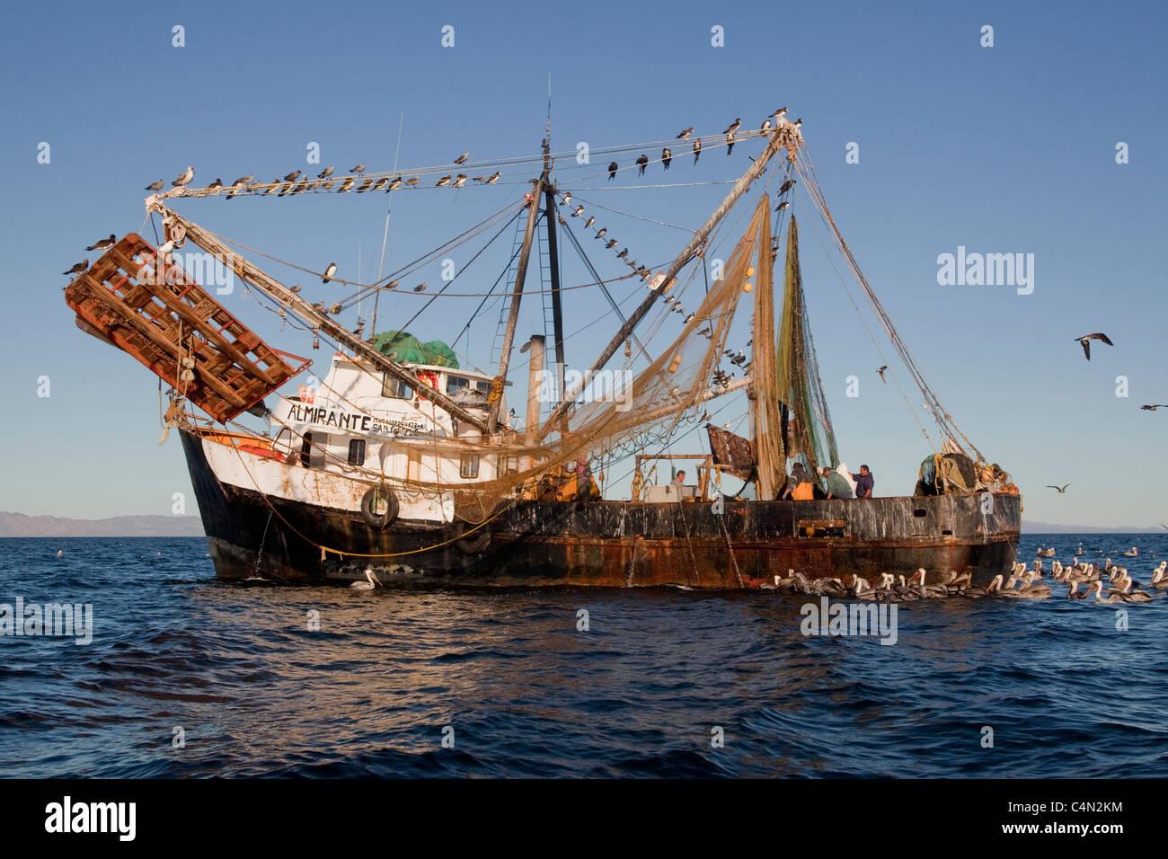 Un arrastrero de camarón mexicano de pesca en Bahía Kino, México. Foto de stock