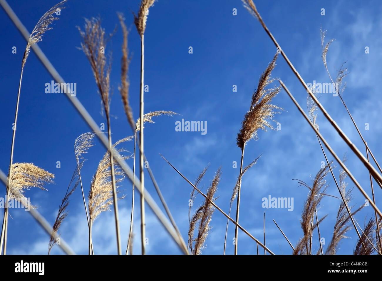 Canción del verano. Las plantas sobre un fondo de cielo azul. DOF superficial. Imagen De Stock