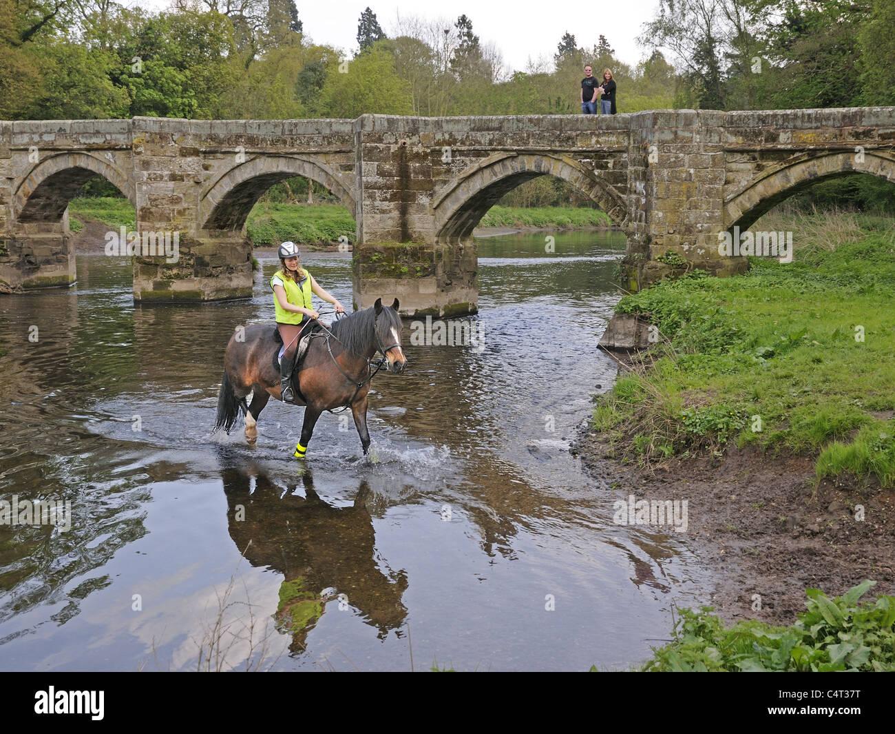 Señora jinete vadear el río Trent con Essex Packhorse Bridge en el fondo cerca de Great Haywood Staffordshire Imagen De Stock
