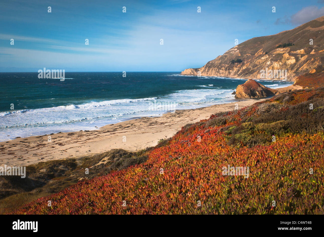Estados Unidos,California,Big Sur,plantas rojas, por playa Imagen De Stock
