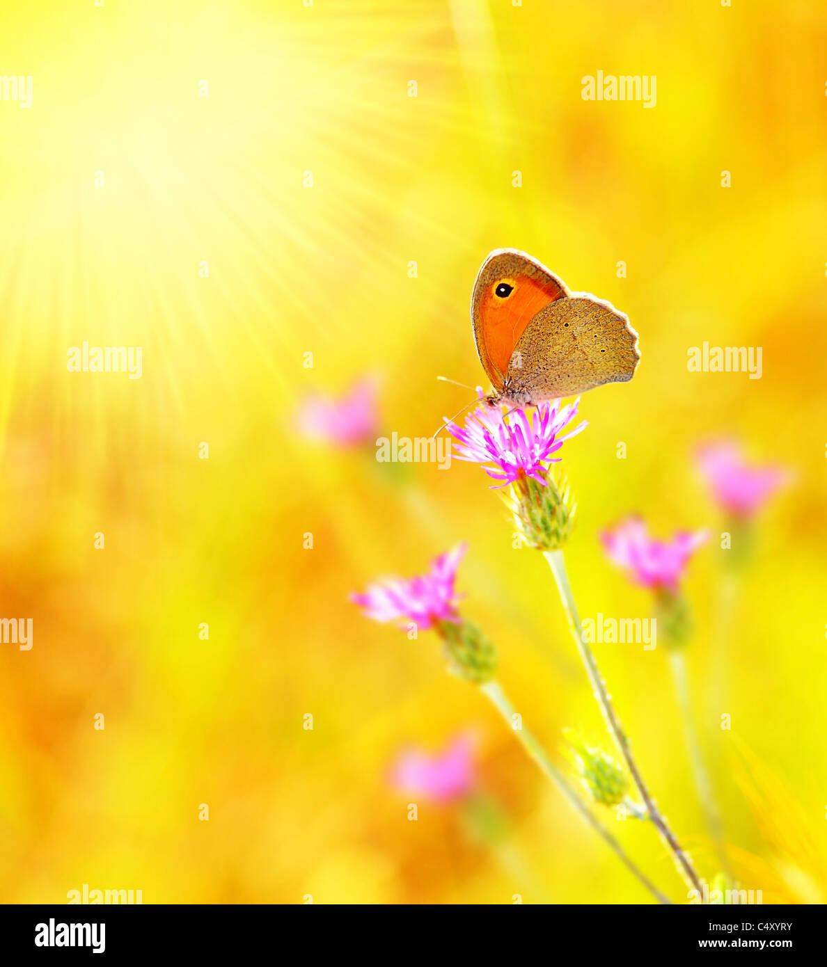 Hermosa mariposa amarilla extreme closeup macro, naturaleza vida en primavera Imagen De Stock