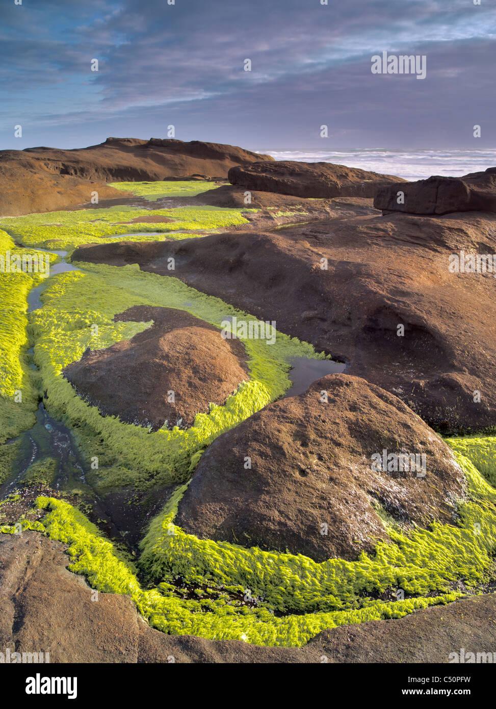 Hierba de mar y océano. Olía Sands State Park, Oregón Imagen De Stock