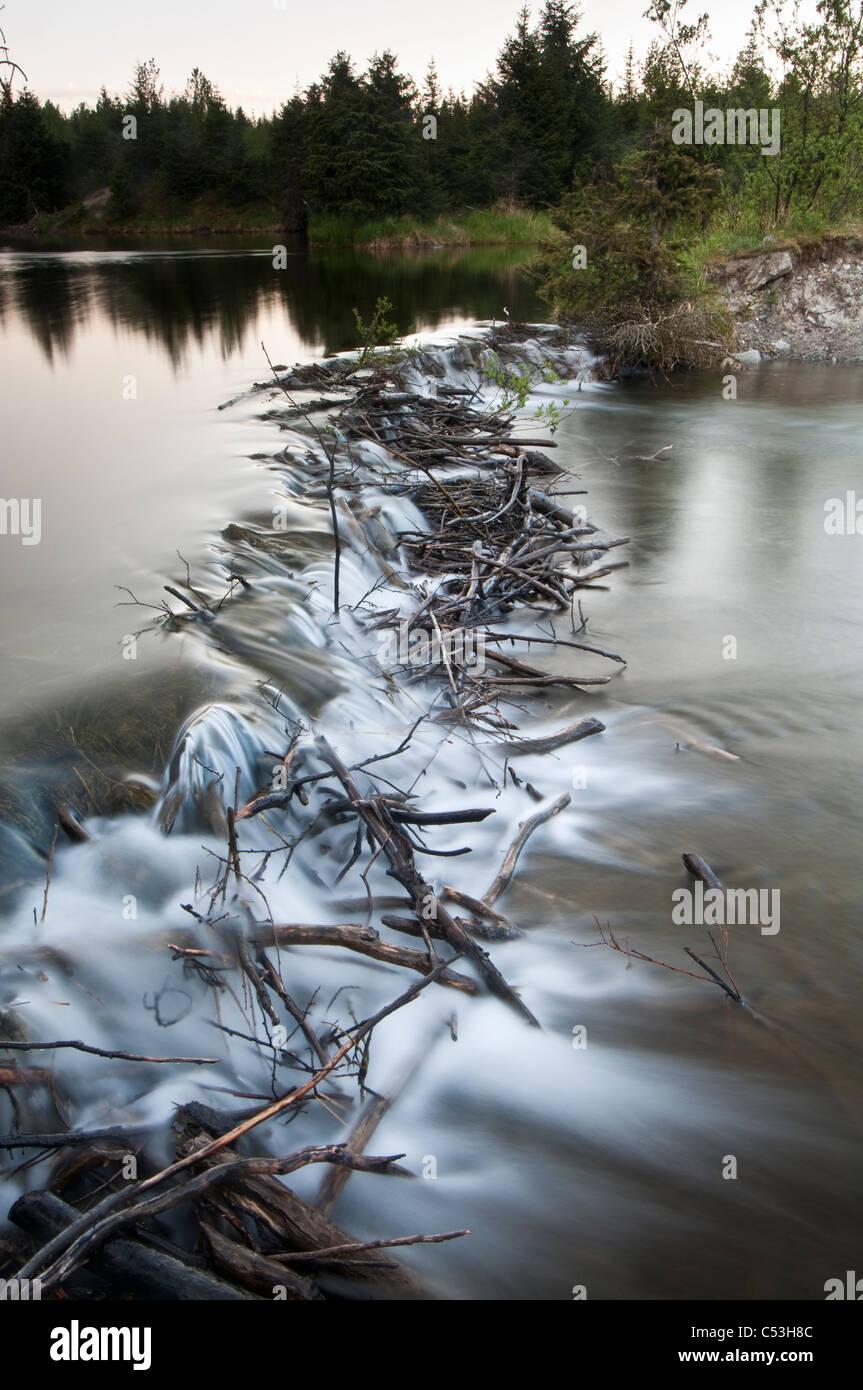 Vista de un dique de castores disminuyendo el flujo de agua de un arroyo en el lago Mendenhall, Juneau, Alaska Imagen De Stock