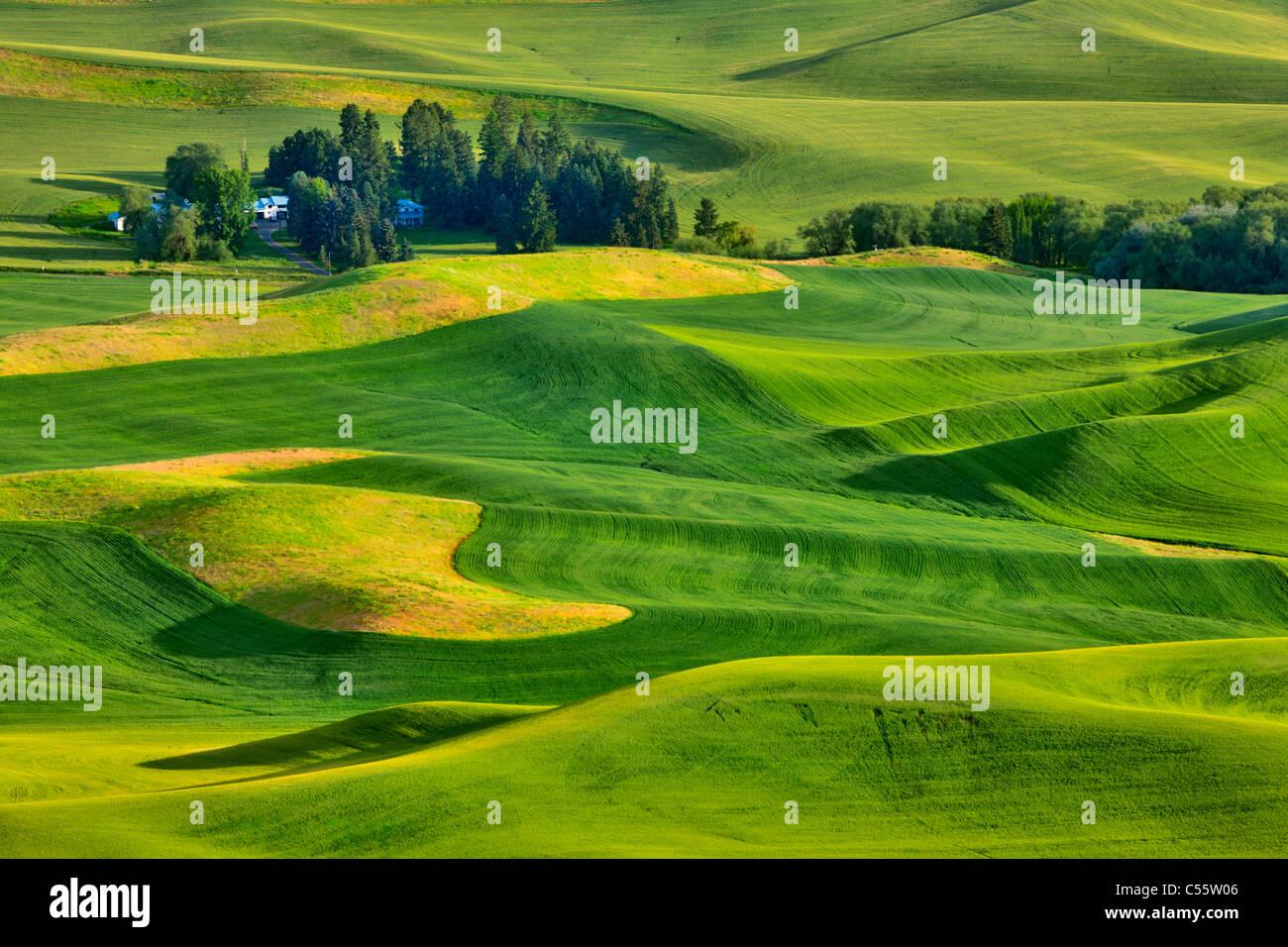 Un alto ángulo de visualización de campos verdes, Steptoe Butte, Palouse, Estado de Washington, EE.UU. Foto de stock