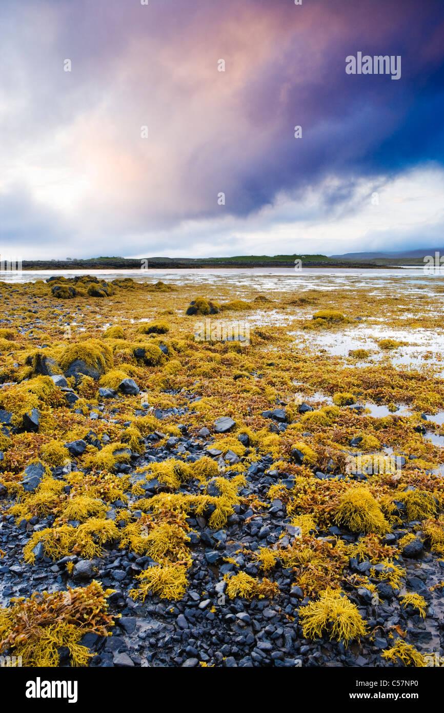 Las algas en la orilla del lago Loch Dunvegan, Isla de Skye, Escocia, Reino Unido. Imagen De Stock